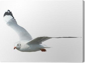 Tableau sur toile Seagull isolé sur fond blanc