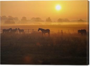 Tableau sur toile Sonnenaufgang auf einer pferdeweide