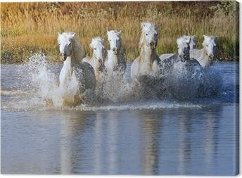 Tableau sur toile Splash Cheval