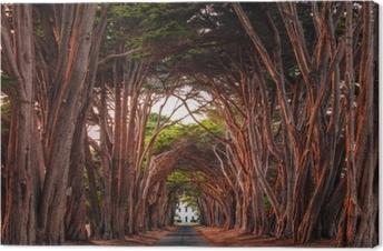 Tableau sur toile Superbe tunnel de cyprès au point de rivières nationales, californie, etats-unis. arbres colorés en rouge à la lumière du soleil couchant.