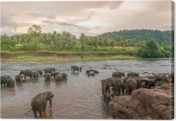 Tableau sur toile Swimmong éléphants