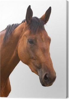 Tableau sur toile Tête de cheval (isolé)