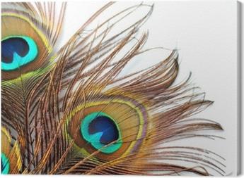 Tableau sur toile Trois plumes de paon