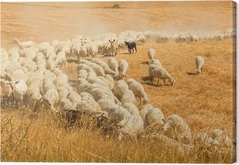 Tableau sur toile Troupeau de moutons dans un champ de la Toscane