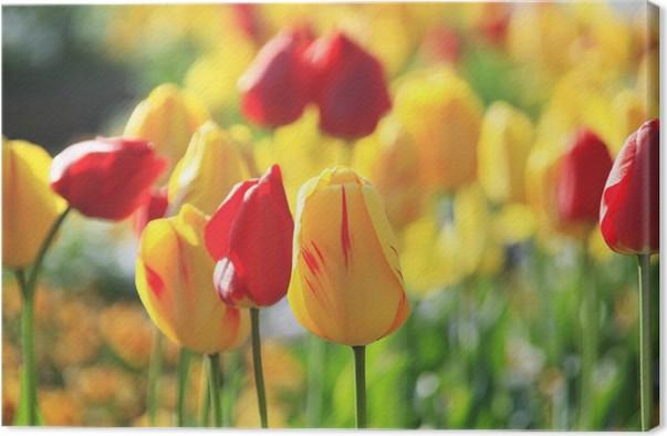 Tableau sur toile Tulipe - Thèmes