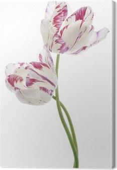 Tableau sur toile Tulipe