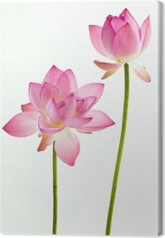 Tableau sur toile Twain rose fleur de nénuphar (lotus) et le fond blanc.