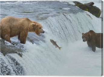 Tableau sur toile Un brun grizzly saumon chasse à l'ours à la rivière, Alaska, Katmai