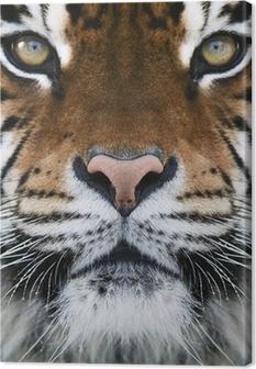 Tableau sur toile Un tigre