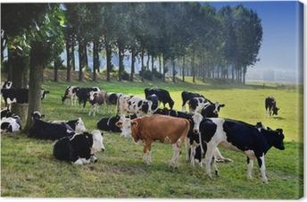 Tableau sur toile Vache dans un pré