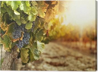 Tableau sur toile Vignobles au coucher du soleil