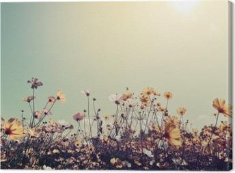 Tableau sur toile Vintage nature paysage fond de champ de fleurs magnifiques cosmos sur le ciel avec la lumière du soleil. couleur rétro effet de filtre de tonalité