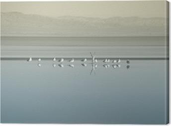 Tableau sur toile Vogelschwarm am Saltonsee / Die Brutkolonie von Vogelschwärmen am Saltonsee in Kalifornien.