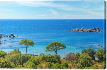 Tableau sur toile Vue de la célèbre plage de Palombaggia avec des pins et de la mer d'azur, Corse, France
