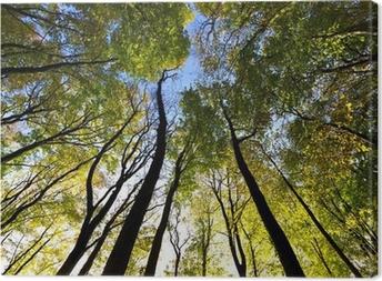 Tableau sur toile Vue du ciel dans la forêt