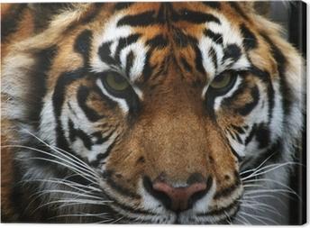 Tableau sur toile Yeux tigre
