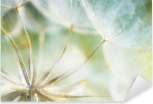 Abstrakti voikukka kukka yksityiskohta taustalla, lähikuva pehmeällä f Pixerstick Tarra