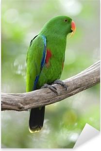 Eclectus papukaija, uros vihreä lintu, indonesia Pixerstick tarra