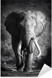 Elefantti-sonni (taiteellinen jalostus) Pixerstick Tarra