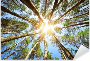 Forest Pixerstick tarra