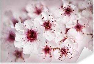 Kirsikan kukkia online dating site on dating kaveri 10 vuotta vanhempi huono