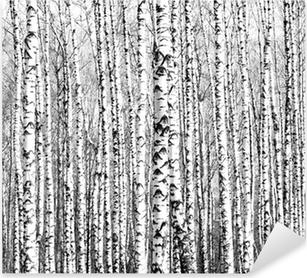 Koivupuiden kevätrungot mustavalkoisena Pixerstick Tarra