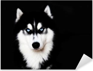Lähikuva sininen silmät koira siberian husky Pixerstick tarra