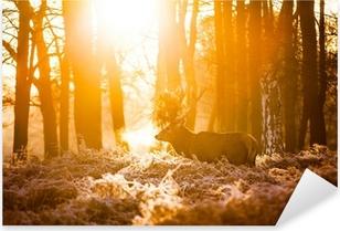 Punainen peura aamulla auringossa. Pixerstick tarra