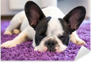 Ranskalainen bulldog nukkuu matolla Pixerstick tarra