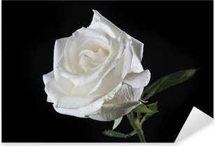 Valkoinen ruusu Pixerstick tarra