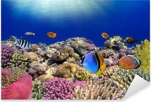Vedenalainen maailma. punaviinin korallikaloja. Pixerstick tarra