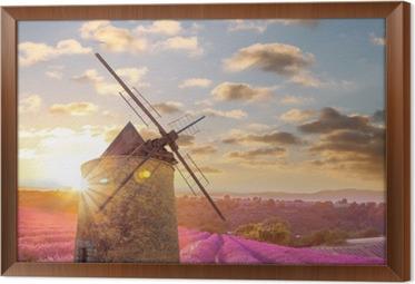 Tavla i Ram Väderkvarn med Levander fält mot färgrik solnedgång i Provence, Frankrike