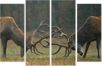 Tetraptych Red deer boj