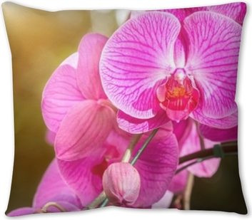 Orchid flower in the garden at winter or spring day for postcard beauty and agriculture idea concept design. Orchids are export business products of Thailand that make a lot of money. Throw Pillow