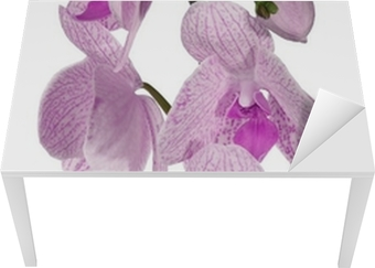 Poster Dunkellila Sammlung Orchideenblüten Isoliert Auf Weiß U2022 Pixers®    Wir Leben, Um Zu Verändern