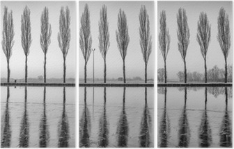 Alberi riflessi sul lago all'alba in bianco e nero Triptych