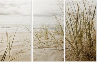 Close up of a tall grass on a beach Triptych