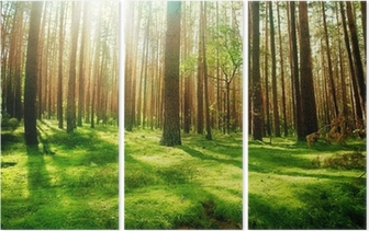 Misty Old Forest Triptych
