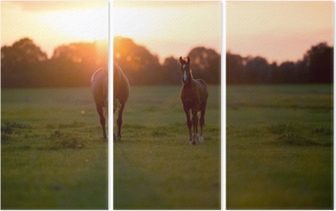 Mother horse with foal on farm land at sunset. Geesteren. Achter Triptych