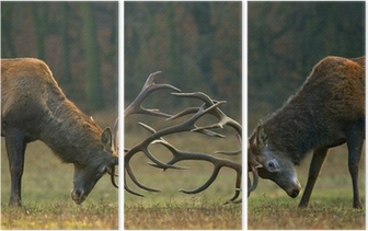 Red deer fight Triptych