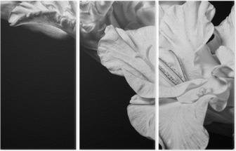 Triptychon Schwarz-Weiß-Gladiole