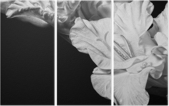 Triptych Svart og hvit gladiolus