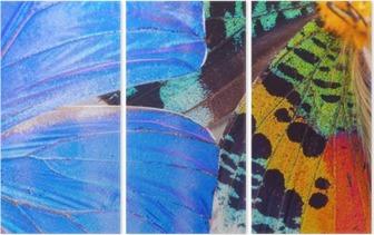 Triptyque Aile des papillons multicolores