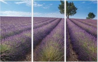 Triptyque Champ de lavande dans le plateau de Valensole, Provence (France)