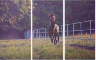 Triptyque Cheval Brown au galop sur le fond des arbres le long de la clôture blanche à l'été