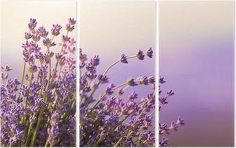Triptyque Fleurs de lavande fleurissent l'heure d'été