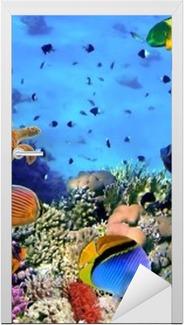 Türaufkleber Foto von einer Koralle Kolonie