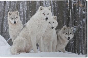 Tuval Baskı Arktik kurt sürüsü