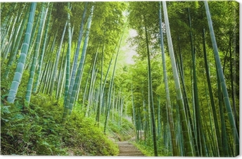 Tuval Baskı Bambu ormanı ve geçit