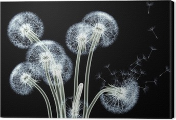 Tuval Baskı Bir çiçek x-ray görüntü siyah izole, Taraxacum dandel